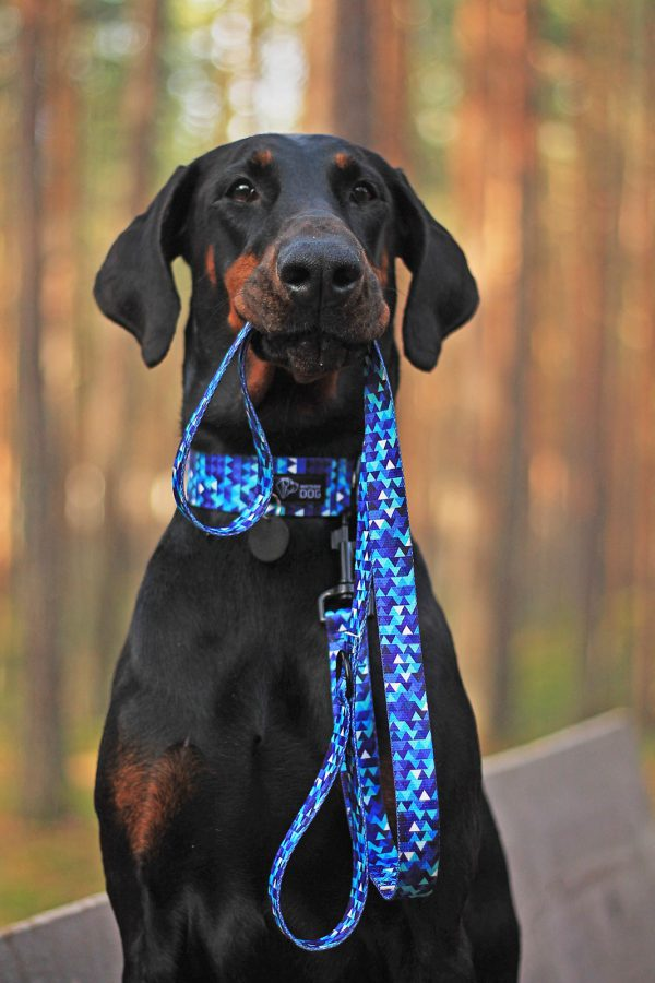 niebieska obroża psa smycz modny wzór