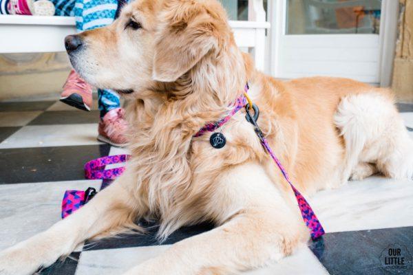 różowy komplet psa odblaski adresatka dla suni