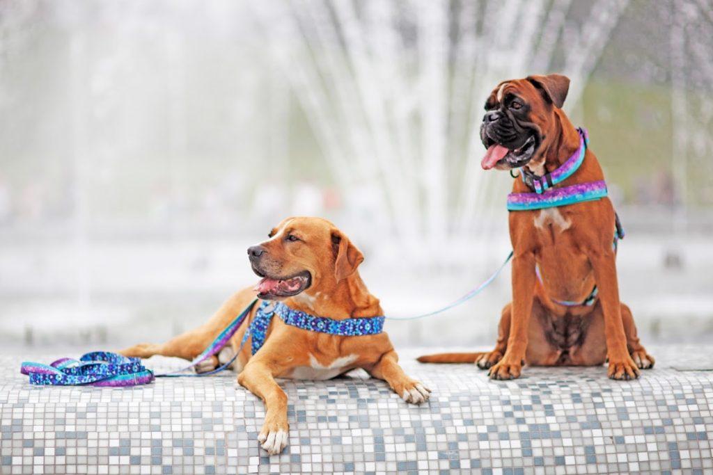 smycz niebieska dla samca pies stylowa