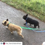the_frenchiebrothers