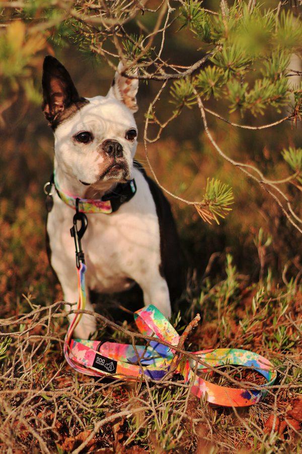 dizajnerska obroża smycz dla psa modna elegancka