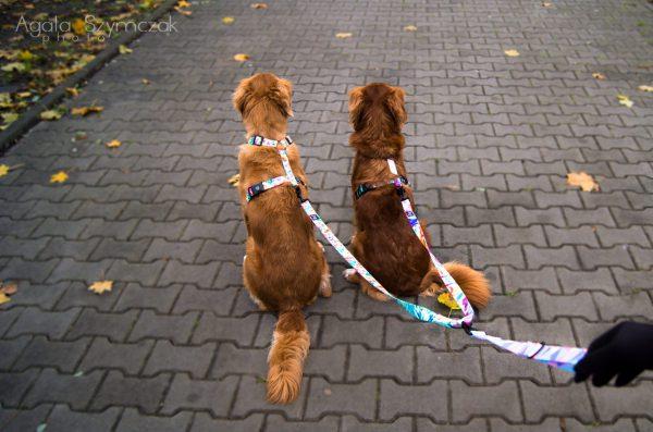 dwójnik - smycz dla psów psów rozdzielacz