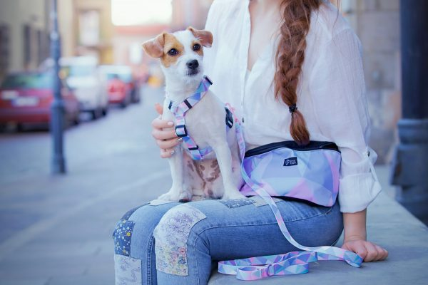 modne pastelowe szeleczki szczeniak mały pies jack russell