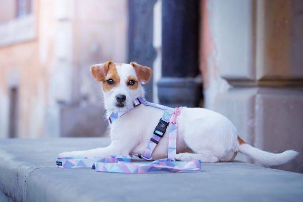 modne szelki pastelowe dla małego psa
