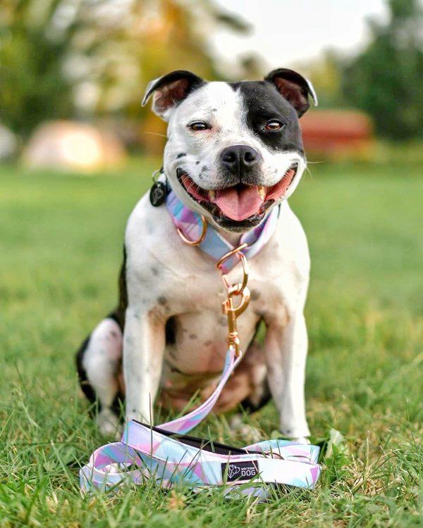 pastelowy komplet spacerowy psa modny dla suni