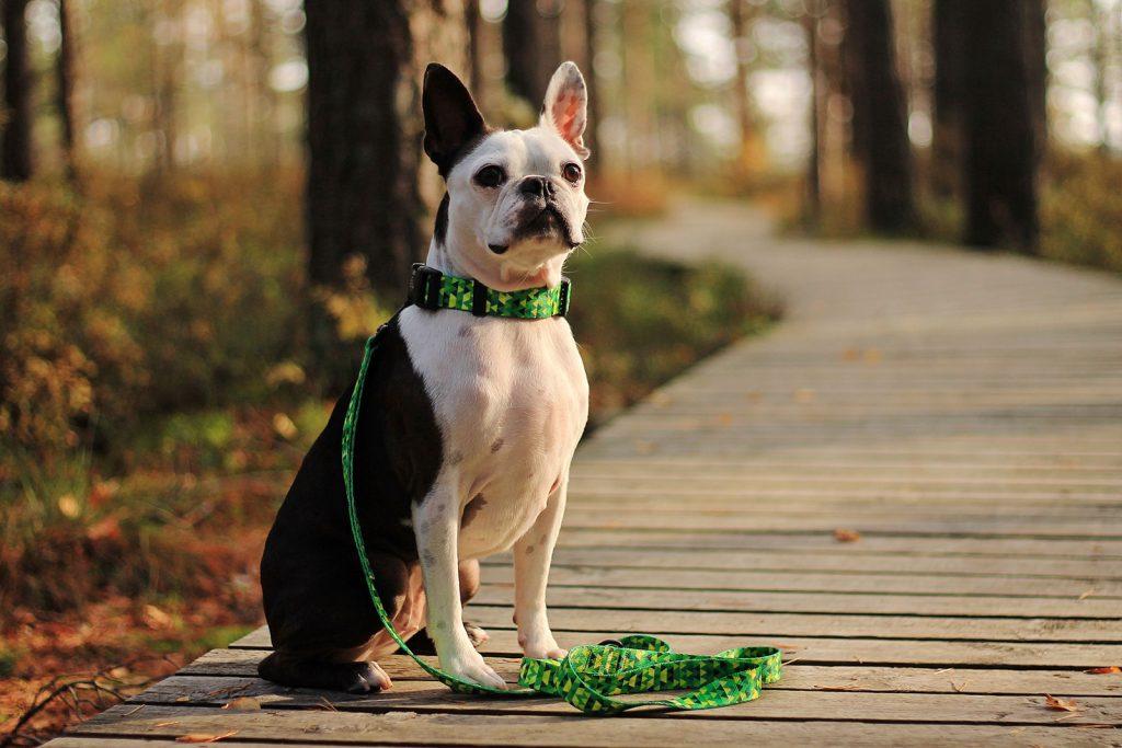 zielona obroża smycz dla psa handmade pracownia warsaw dog