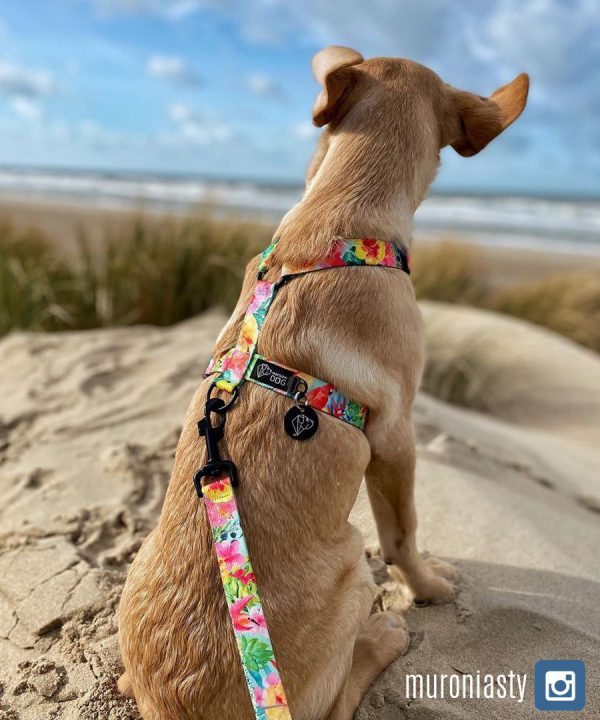 szelki smycz tropikalne dla psa