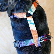 szelki-guard-harness-warsaw-dog-z-nadrukiem