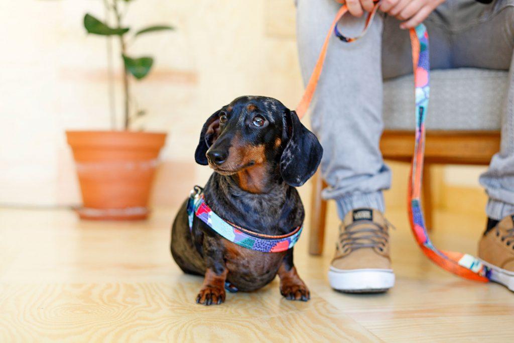 Pies w kawiarni miejsce przyjazne psom Warszawa