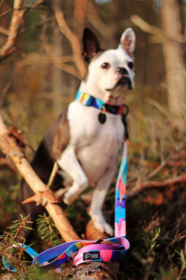 smycz warsaw dog shake kolorowa