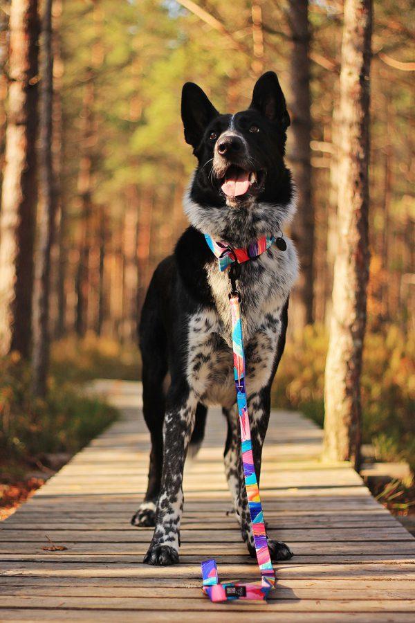 stylowa modna smycz regulowana dla psa kolorowa warsaw dog