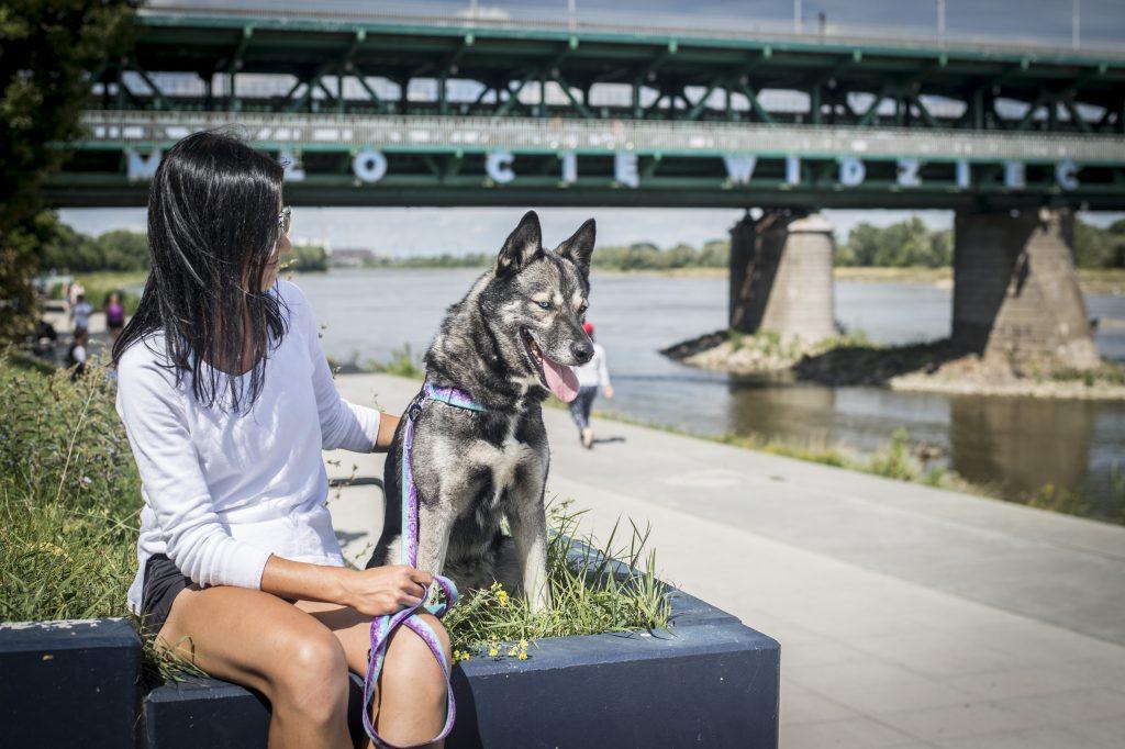 Pies w Warszawie na tle mostu z neonem Miło Cię Widzieć, ubrany w zestaw Aqua Violet