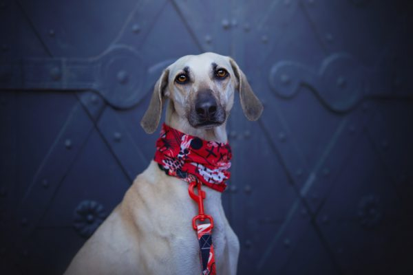 Bandamka dla psa typu komin, czerwona - Rebel