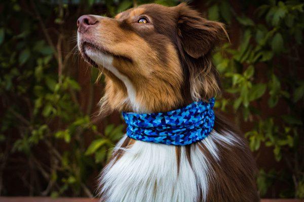 chusty dla psów apaszka