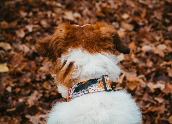 polska marka dla psa obroża design