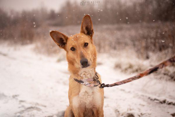 smycz regulowana dla psa rose gold warsaw dog