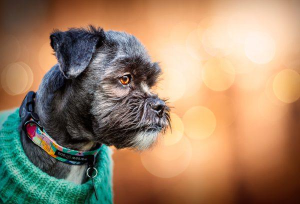 stylowa obroża z klamrą polski dizajn producent warsaw dog