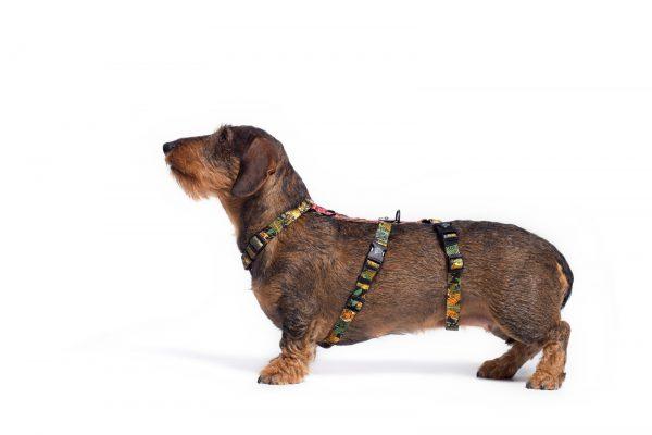 Bezpieczne szelki antyucieczkowe dla psa po adopcji