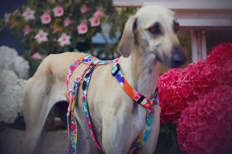 Szelki - wyprawka dla psa z adopcji