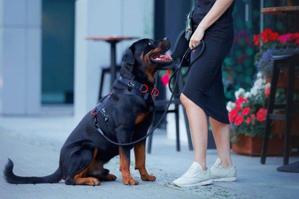 dizajnerskie szelki modowe dla psa w kolorze czarnym