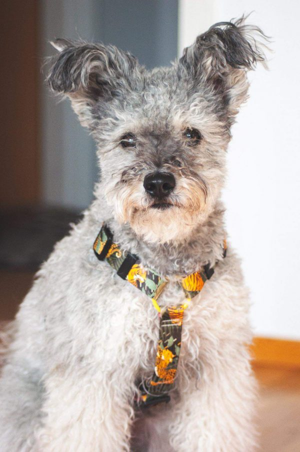 szelki dla psa personalizowane ręcznie robione