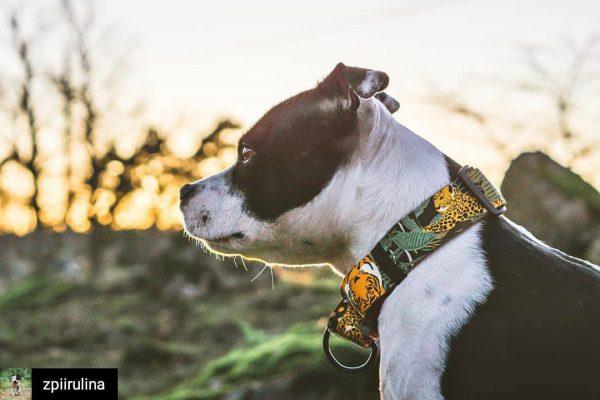 wild cats martingale obroża warsaw dog design