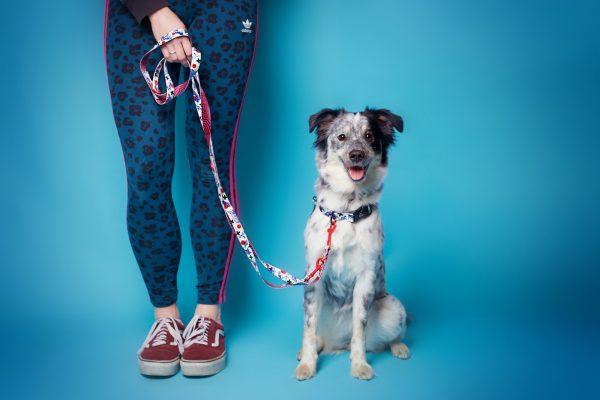 kolorowy zestaw spacerowy dla psa dizajnerski