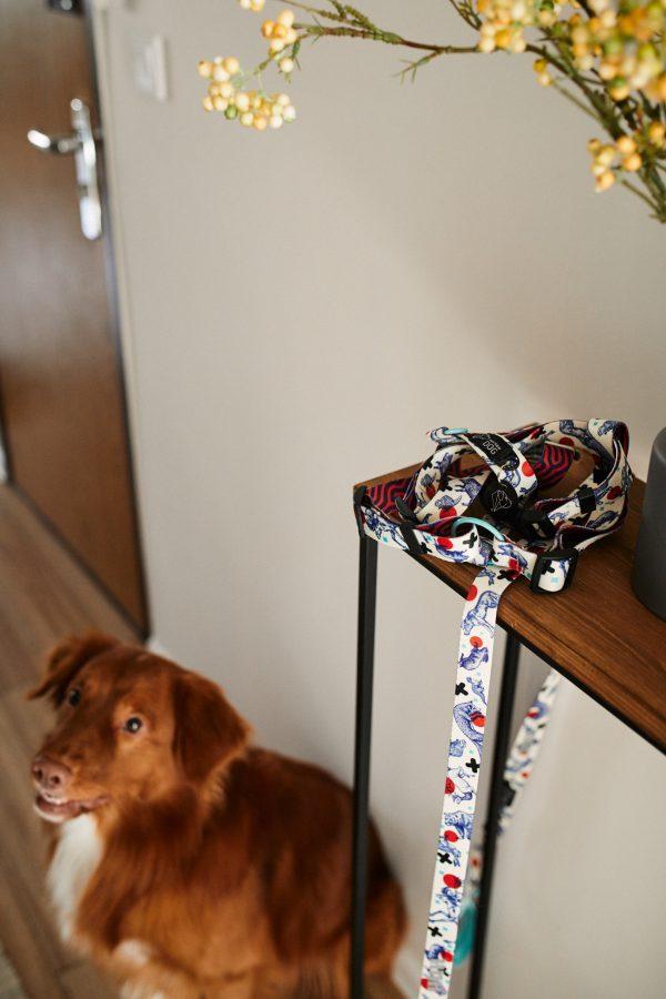 zestaw dla-psa smycz szelki kolorowe dizajnerskie stylowe