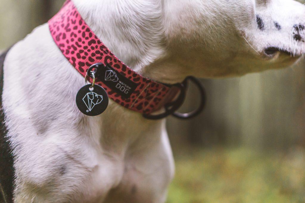bordowa obroża w panterkę dla psa