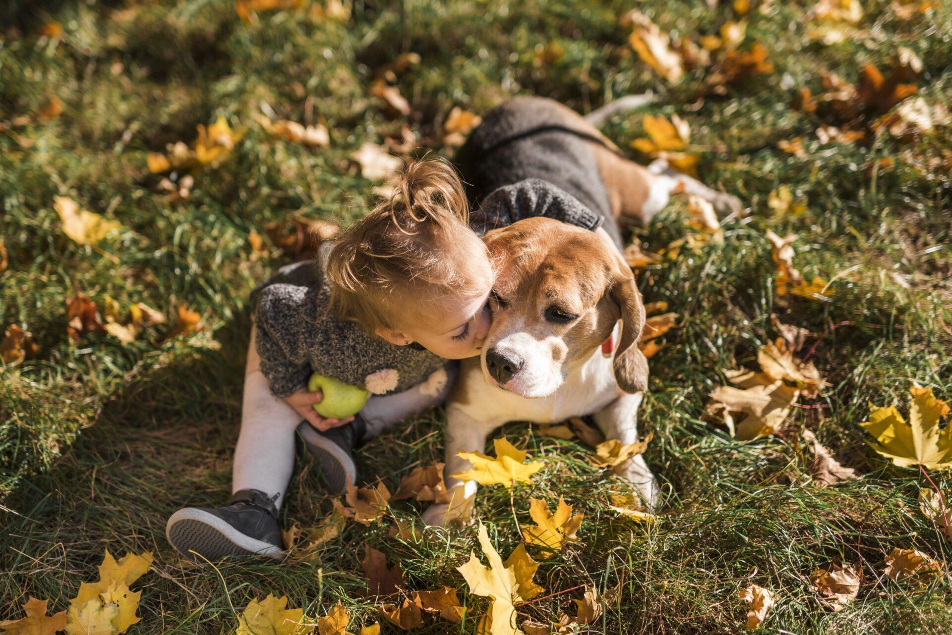Opis rasy Beagle