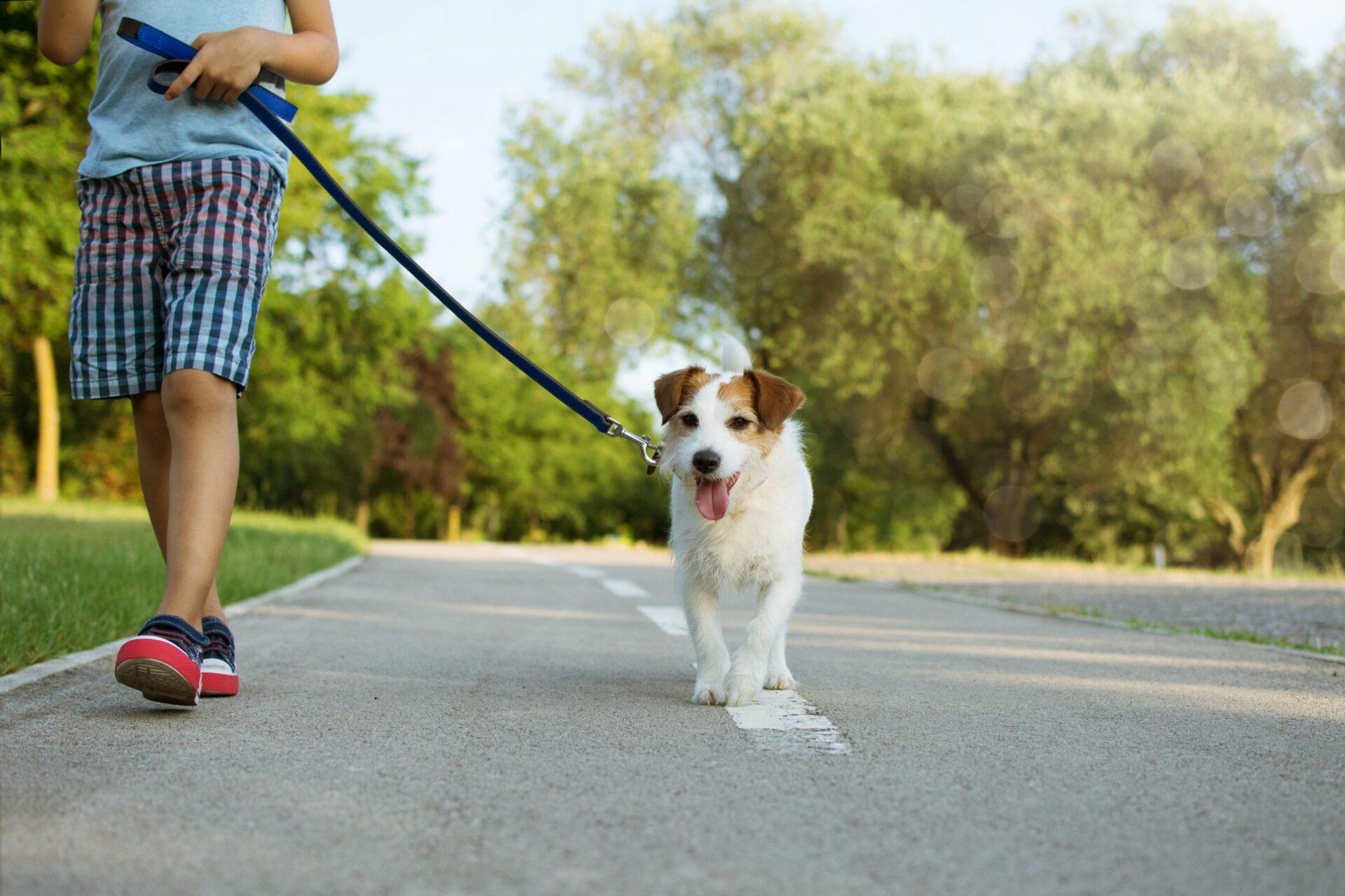 Jak nauczyć psa chodzić na smyczy?