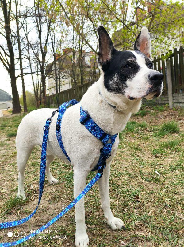 szelki dla psa z zapięciem z przodu i rączką na plecach