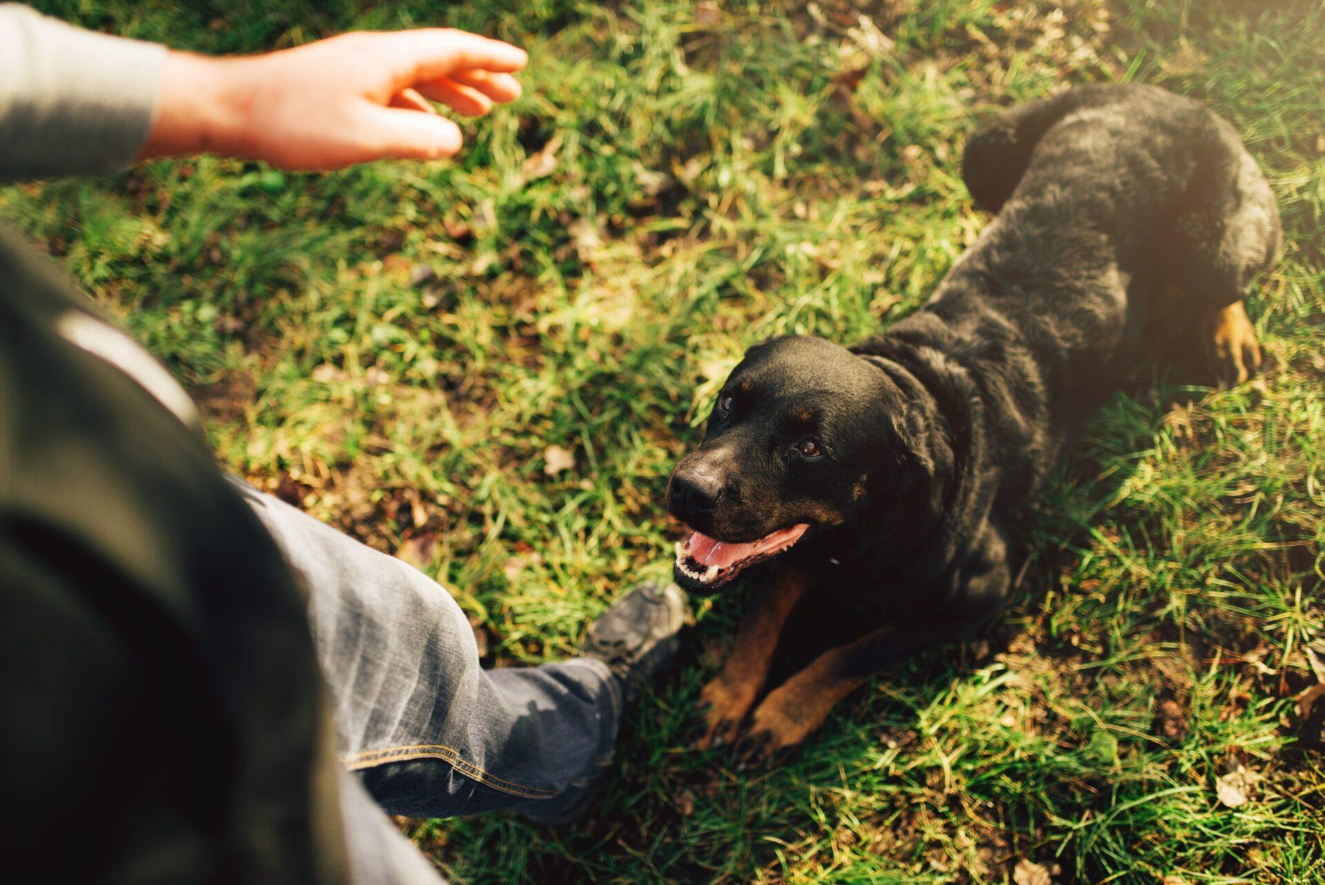 Jak nauczyć psa leżeć?
