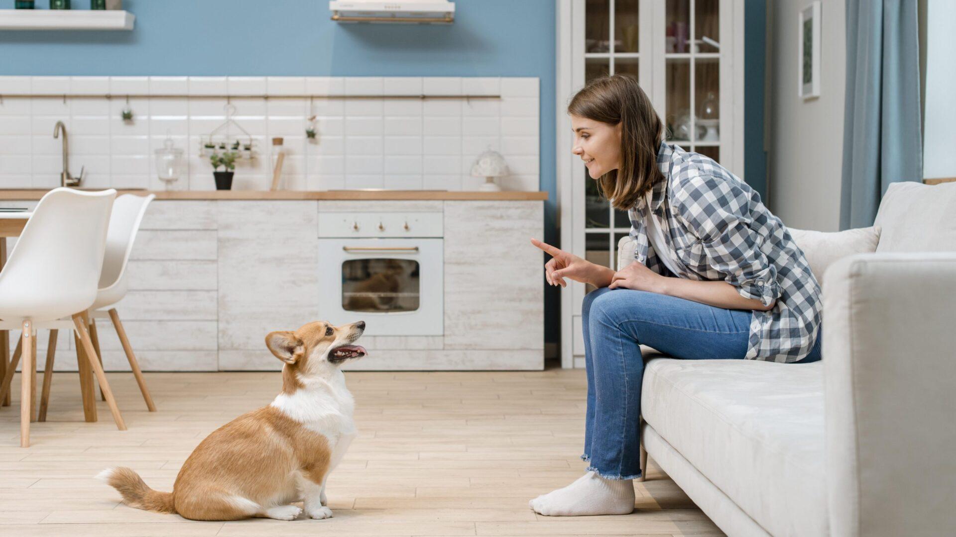 Jak nauczyć psa daj głos?