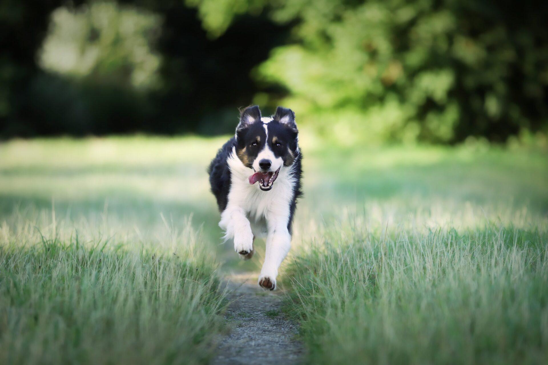 Jak nauczyć psa noga?
