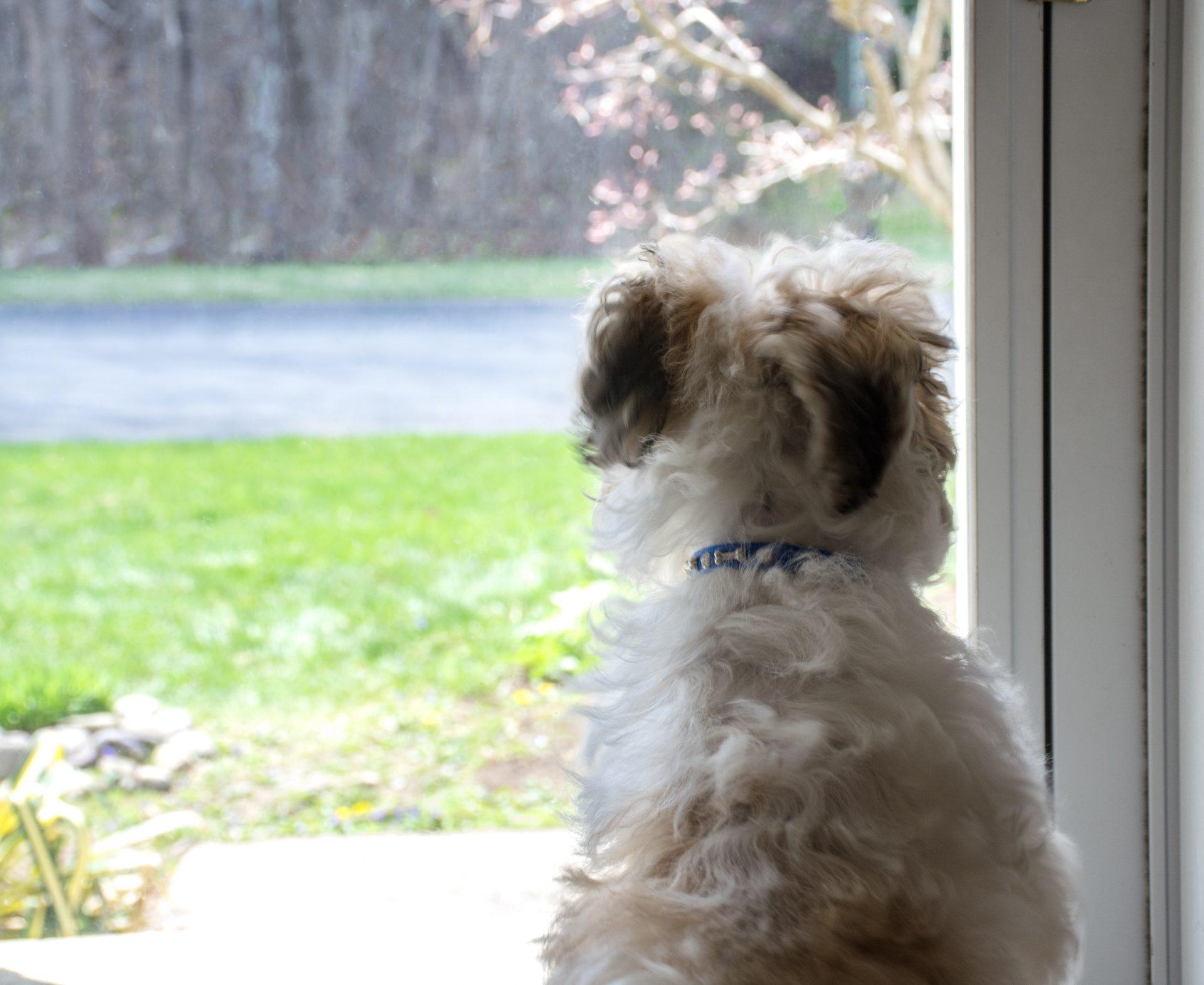 Jak nauczyć psa zostawać w domu?